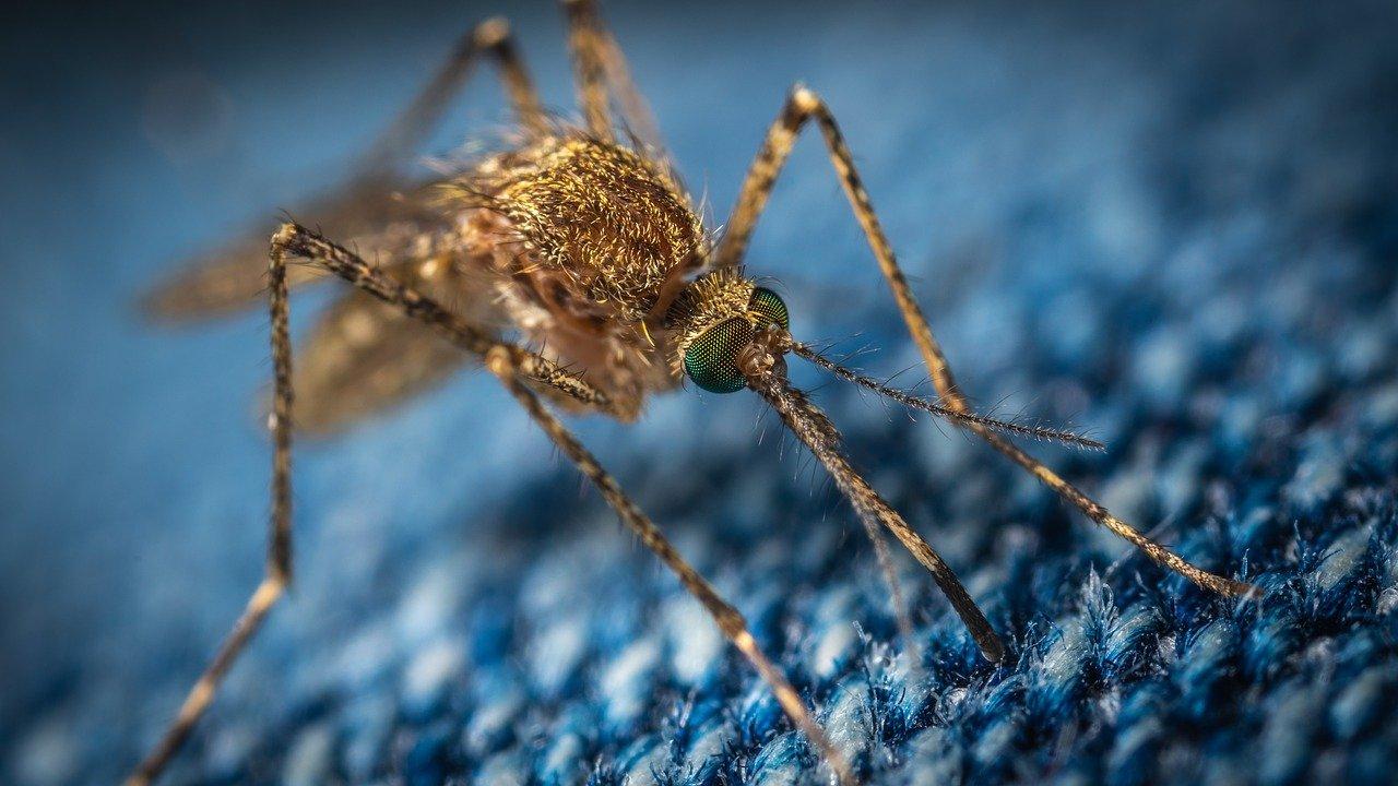 repulsif moustique